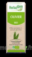 Herbalgem Olivier Macérat Bio 30ml à ODOS